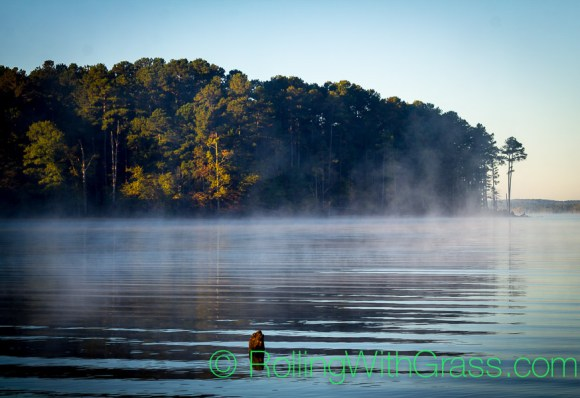 Rolling With Grass at Jordan Lake Sunrise Mist Water Trees Small Shot