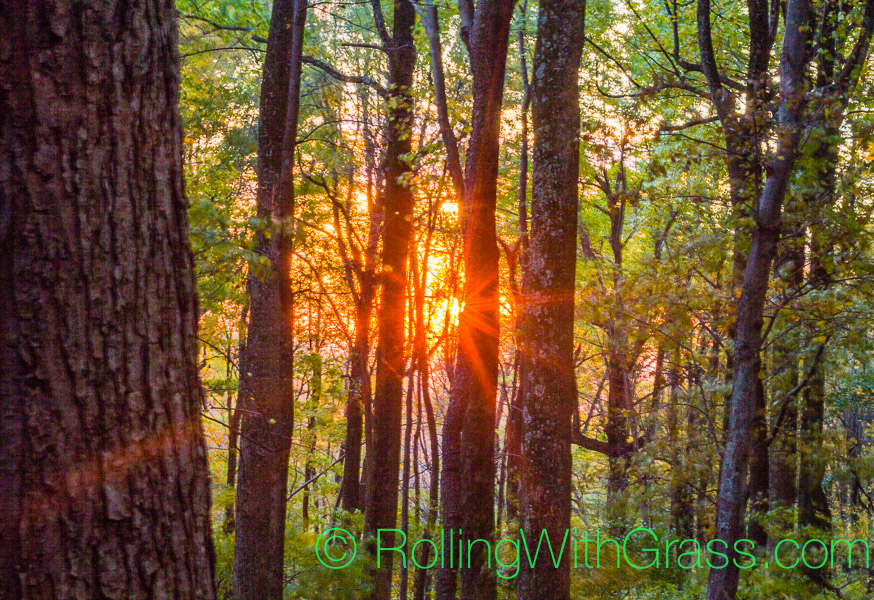 Sunrise through the trees at Peaks of Otter Rolling with Grass VA10-2014