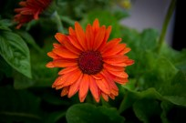 Essex NY Flowers-4