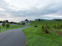 Whitebarrel Winery-3