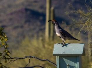 Arizona_Phoenix_Lost Dutchman State Park_6415