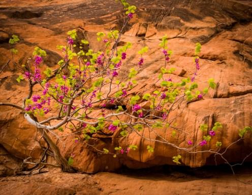 Arizona_Rainbow Bridge_Lake Powell_7268