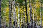 Aspen Colorado_Maroon Bells-5724