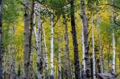 Aspen Colorado_Maroon Bells-5724