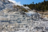 Yellowstone-Mammoth Hot Springs-7470