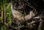 Florida_Everglades Natl Park_Shark Valley_9468