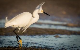 St Pete FL-Birds at Ft DeSoto Park_1806