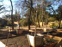 Tree Planter Box - Home Decor