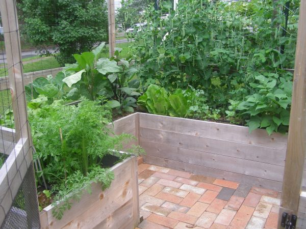 Deer-Proof Vegetable Garden Kit by Maine Kitchen Gardens and Gardens to Gro