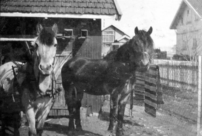 """Hestetransport ved Hauge bruk Ved sagbruket ble det mye treavfall. Brødrene Ludvig og Hans Huser kjørte knubb og """"sprekkel"""" fra bruket til arbeidere og andre kunder i nærområdet. Arbeiderne fikk veden gratis, men måtte betale for transporten. Hesten kom frem i de trange smugene og leverte lasten ved skjuldøra. På 1930-tallet kostet kjøringen fra kr 3.00 til kr 3.50. Hauge bruk brant i 1954. Hestetransporten opphørte noe tidligere. Kilde: Rolvsøy bygdebok."""