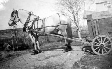 """Ved sagbruket ble det mye treavfall. Brødrene Ludvig og Hans Huser kjørte knubb og """"sprekkel"""" fra bruket til arbeidere og andre kunder i nærområdet. Arbeiderne fikk veden gratis, men måtte betale for transporten. Hesten kom frem i de trange smugene og leverte lasten ved skjuldøra. På 1930-tallet kostet kjøringen fra kr 3.00 til kr 3.50. Hauge bruk brant i 1954. Hestetransporten opphørte noe tidligere. Kilde: Rolvsøy bygdebok."""