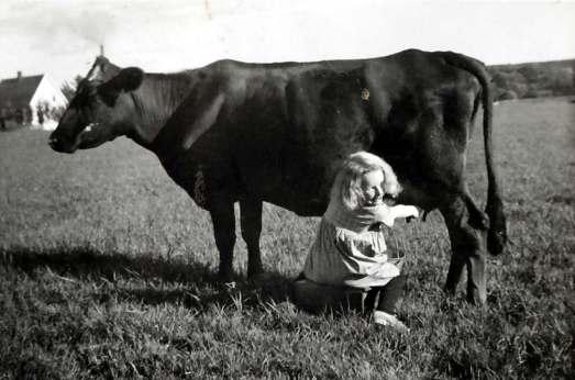 Opplæring i melking. Hanseløkken , Evje 1933
