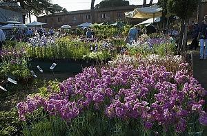 Fiori in fiera e larte del giardinaggio Rose peonie arredi e picnic  Roma  Repubblicait
