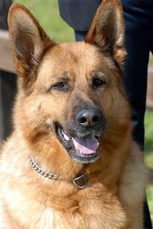 No allabbandono dei cani arriva il commissario Rex  Roma