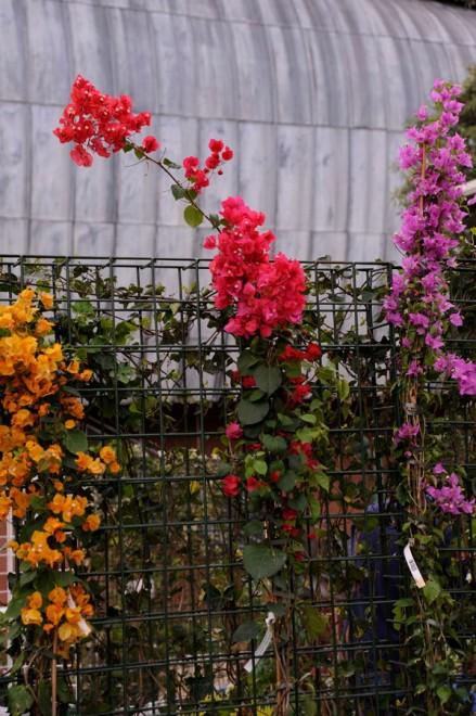 Foto LAuditorium giardini in fiore al Festival del Verde e del Paesaggio  1 di 14  Roma