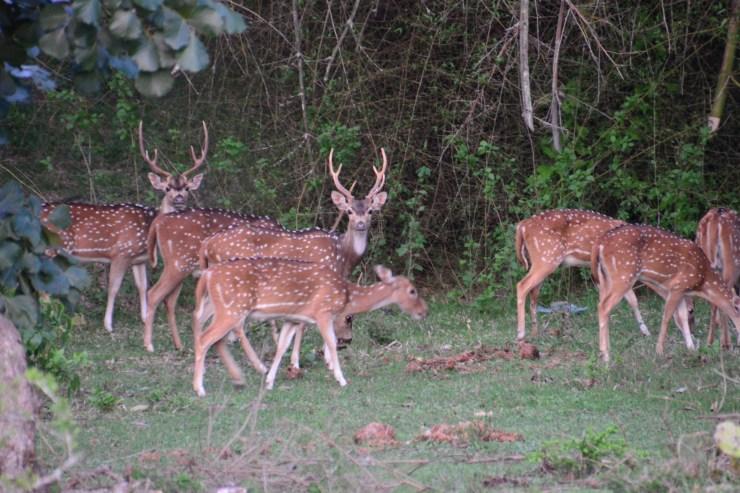 Exploring Western Ghats : Part 10 : Masinagudi