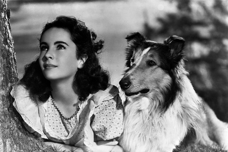 Liz Taylor und Lassie