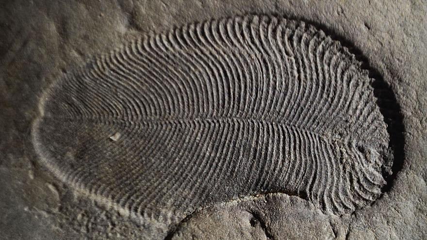 Ältestes Fossil