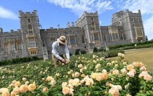 Βρετανία: Η Βασίλισσα ανοίγει τον κήπο του κάστρου Γουίνδσορ για το κοινό έπειτα από 40 χρόνια