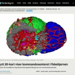 New article on Forskning.no on our 3D pituitary Atlas