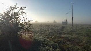Meadow in the Mist