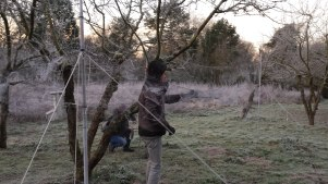 Mist-net opening is not so easy during very cold mornig