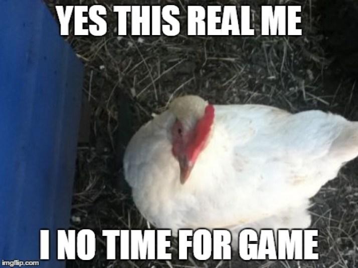Romance Scammer Meme