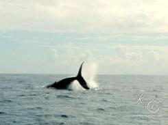 Whale-fun