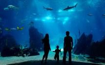 Aquarium Pacific Long Beach