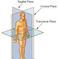 Multi-planar movements, neuro fat loss, and more therapy. Image