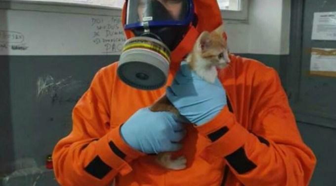 Pisici ramase captive in Blocul Mortii din Timisoara, salvate de pompieri. Echipele ISU au auzit mieunături disperate şi insistente 1