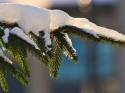 Mai vine Crăciunul? Vară la mijloc de decembrie, în România. Urmează temperaturi cu peste 15 grade mai ridicate faţă de normal 6