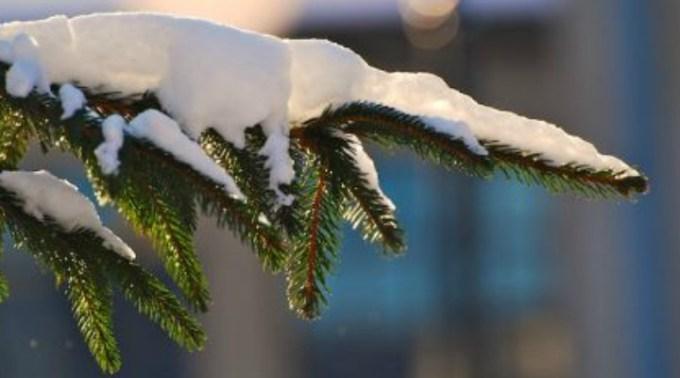 Mai vine Crăciunul? Vară la mijloc de decembrie, în România. Urmează temperaturi cu peste 15 grade mai ridicate faţă de normal 1