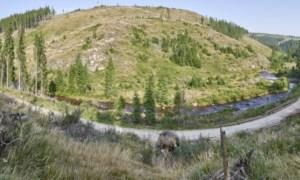 Pădurile României protejate de străini. România primește ultimatum de la Comisia Europeană pentru defrișări ilegale 42