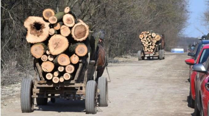 Încă un pădurar agresat de hoții de lemne, la doar o zi după ce un altul a fost ucis. Ar trebui jandarmii să meargă prin păduri și noroaie după hoți sau să stea la căldurică să apere politicieni? 1
