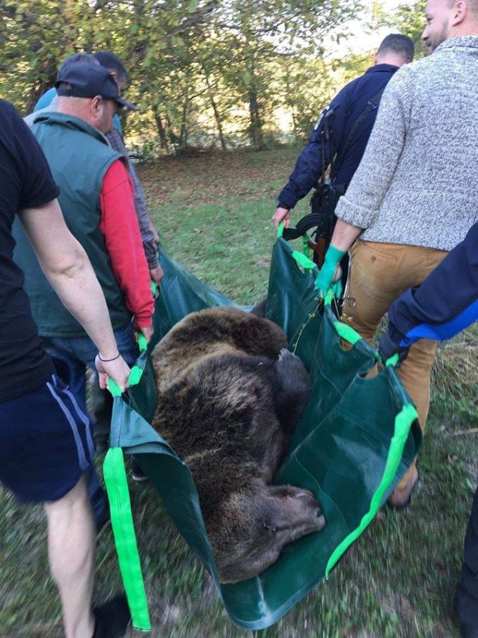 """(Foto) Caz grav de urs prins într-o capcană. Tiberius: """"O ursoaica bătrână a fost salvata de membrii organizației noastre, Dr. Szász István Endre si Berde Lajos, in cooperare cu Jandarmeria judeteana si Ocolul Silvic ! Le multumesc ..."""" 6"""