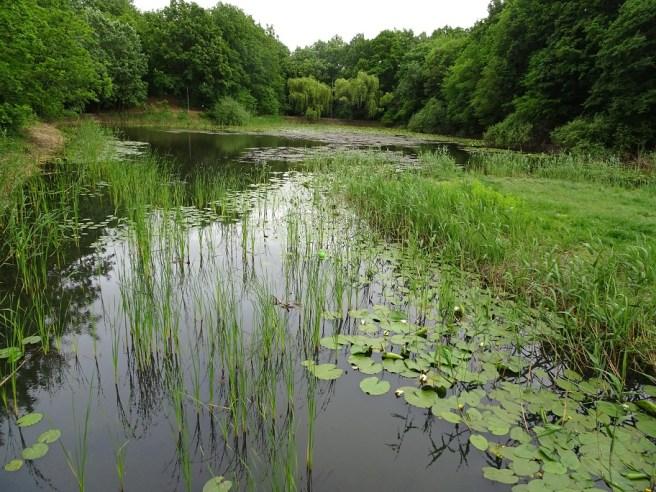 Lacul cu nuferi din Pădurea Baisa (Ipoteşti)