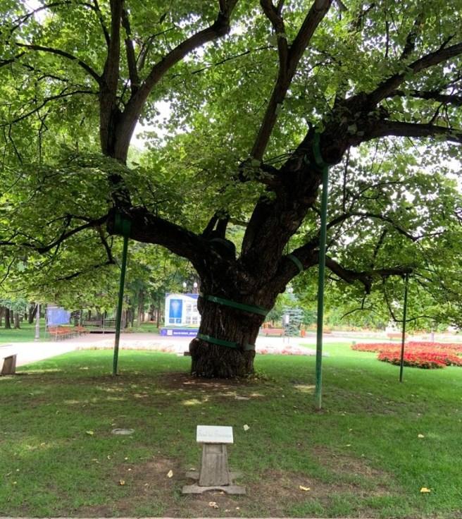 Parcul Copou - Teiul lui Eminescu (Iași)