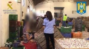 Români exploataţi la cules de usturoi în provincia Cuenca