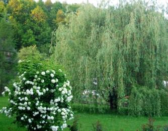 Lush Green Nature