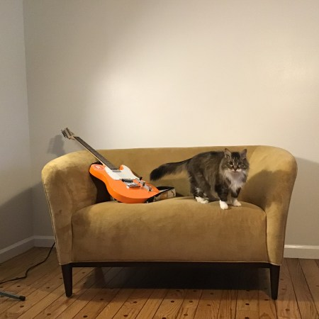 My guitar and cat