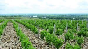 pabiot-vineyards