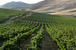 sardinia-vineyards