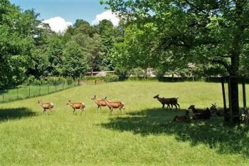 Парк Лангенберг в Цюрихе с дикими животными