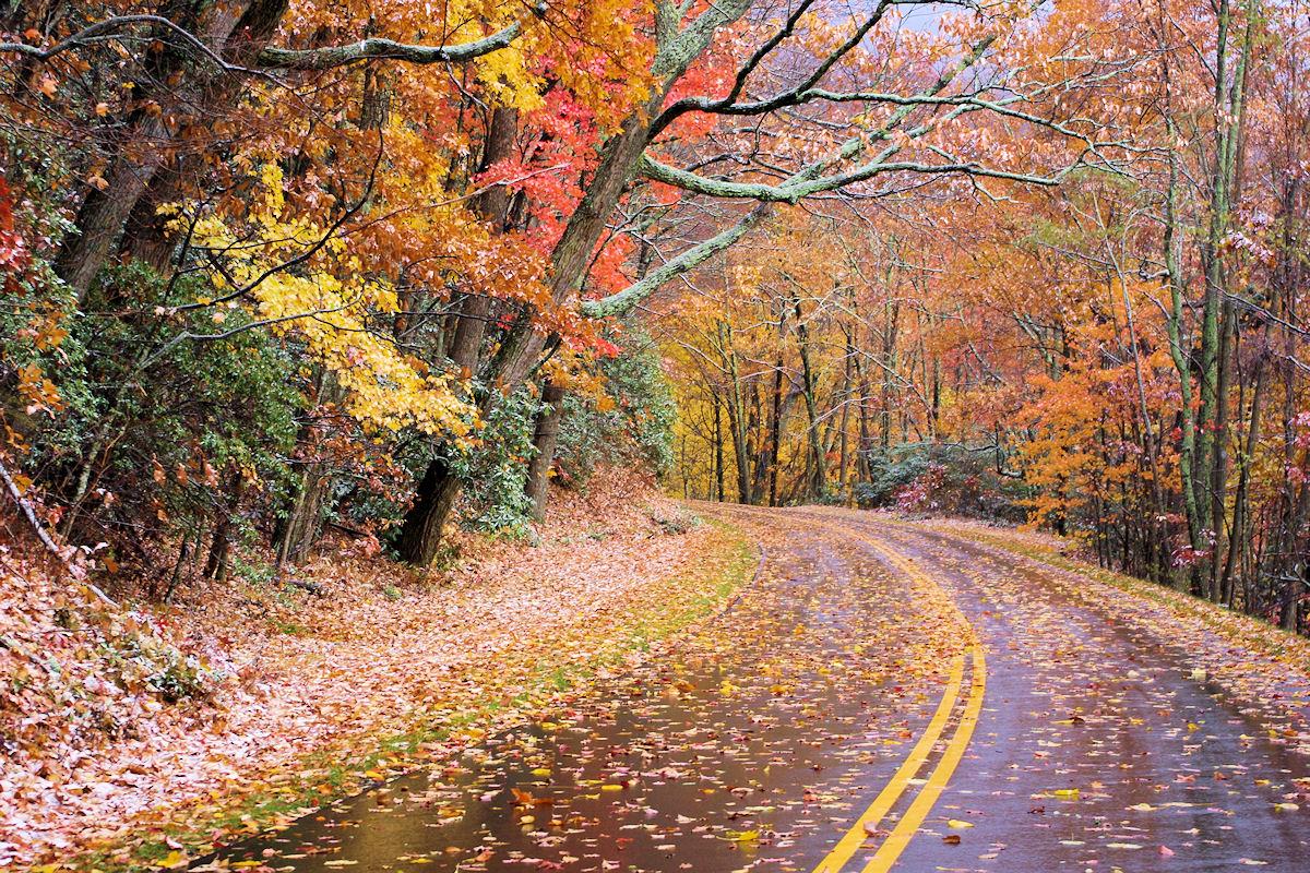 fall foliage forecast and