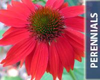 Perennials_200x160Button
