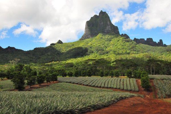 moorea-agricultural-school