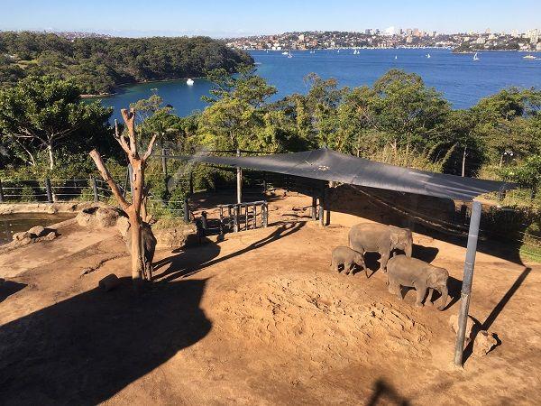 taronga-zoo-sydney