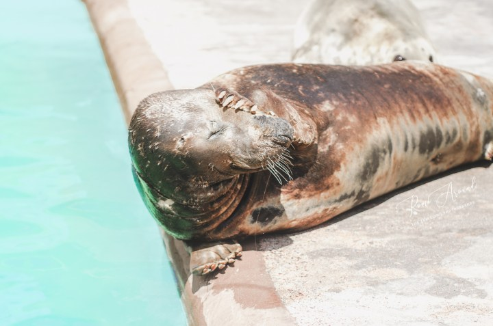 This Seal Sanctuary is a Must See in Cornwall