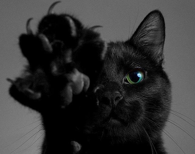 Stage di gatti: riti satanici e pellicce